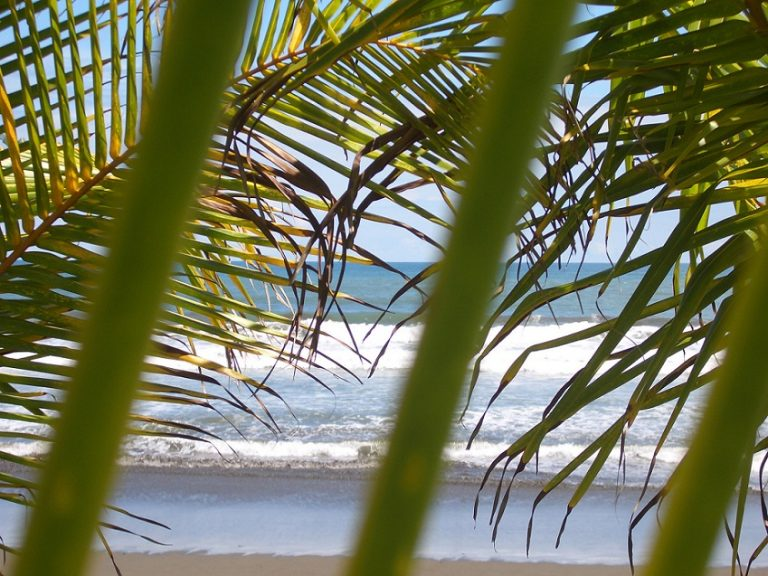Matapalo | Surfing Beaches in Costa Rica